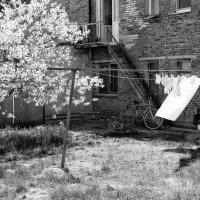 Общежитие :: Александр Пиленгас