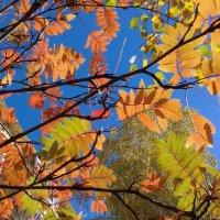 Краски сентября . :: Мила Бовкун
