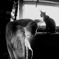 Один серый другой белый,два веселых сфинкса :: Марина Влади-на