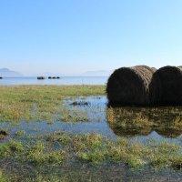 Красноярское море Хакасия :: Лариса