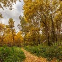Осень :: Александр Иващин