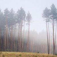 """Из серии """"Лес в тумане"""" :: Сергей Корнев"""