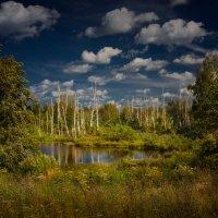 Тайны леса :: Дмитрий Motorin