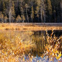 Золотая осень на севере Карелии :: Роман Дудкин