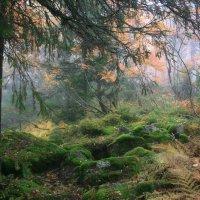 Осень в тайге :: Галина Ильясова