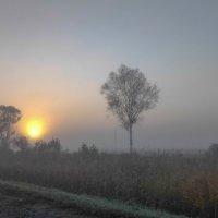 Туманное утро сентября :: Николай Сапегин