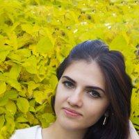 Осень листвой окутала :: Евгений Князев