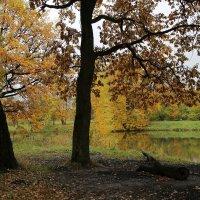 Осенний парк :: ZNatasha -