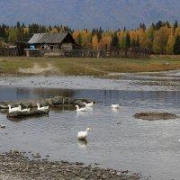 В деревне Верхний Уймон :: Галина Козлова