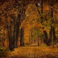 Осени пора :: Дмитрий Motorin