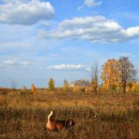 Эта теплая винная осень опьяняет своей красотой ... :: Евгений Юрков