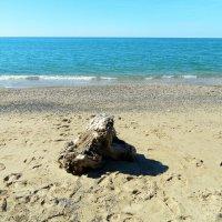Пляж :: Алла Захарова