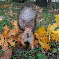 Осень, осень,ну давай у листьев спросим... :: Наташа С