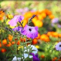 Цветы запоздалые.. :: Александр Шимохин