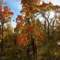 Под деревьями. :: Валерий Медведев