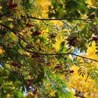 Осень в городе! :: Валентина  Нефёдова