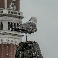 Venezia. Il Campanile di Piazza San Marco. :: Игорь Олегович Кравченко