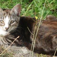 Котёнок :: Маргарита Батырева