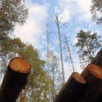 Настоящее и будущее леса. :: Любовь