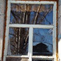 Отражение в кухонном окне :: Светлана Рябова-Шатунова