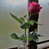 Дождь за окном. :: Венера Чуйкова