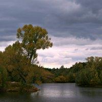 Осень краски разбросала на деревья и кусты... :: Евгений Юрков