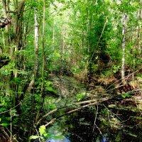 лесной водоем :: Владимир