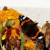 Бабочка в октябре. :: Людмила