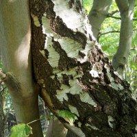в лесу :: elena manas