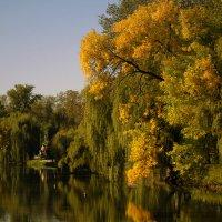 Осенние мотивы. :: barsuk lesnoi