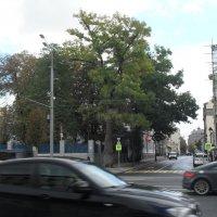 За деревьями дом  Берии Малая Никитская 28/1 :: Надежда