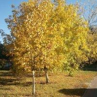 Осень-осень! :: Serg