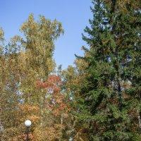 Осень , осень . . . :: Борис