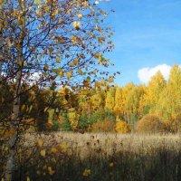 Pamiškė / The outer wood :: silvestras gaiziunas gaiziunas