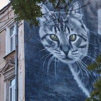 Граффити Одессы :: Сергей Волков