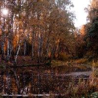 Краски осени :: Budarin Alexandr