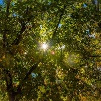 поймать луч солнца :: Ольга (Кошкотень) Медведева