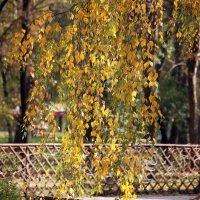 Осенняя берёзка. :: barsuk lesnoi