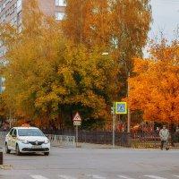 Осень с волшебными красками листьев  :: Alexander Royvels
