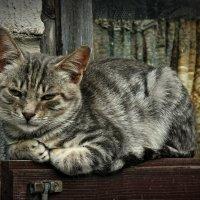 Совсем загрустил котейка :: Глeб ПЛATOB