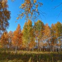 Как хорошо в гостях у Осени среди берёзок золотых! :: Елена (Elena Fly) Хайдукова