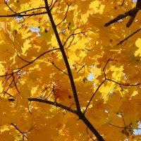 Цвет осени. :: Лариса Исаева