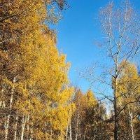 В золотом наряде октября :: Николай Белавин