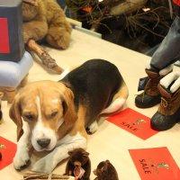 Купите.....и собаку живую! :: ZNatasha -