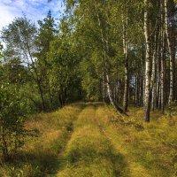 дорога в березняк :: оксана