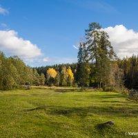 Поляна в альпийском стиле в болотном крае :: Яна Старковская