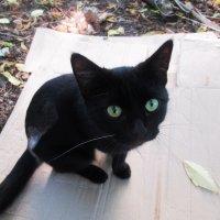 Котёнок :: Лариса
