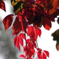 осенние листья-2 :: юрий иванов