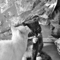 опять коты :: Бармалей ин юэй