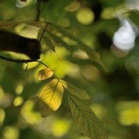 жёлтая лапа :: Бармалей ин юэй